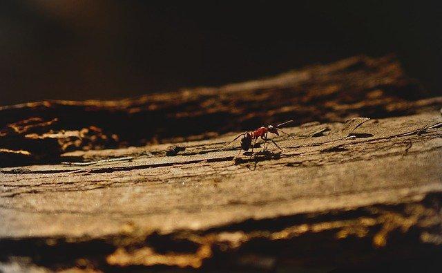 Toto ste o mravcoch nevedeli