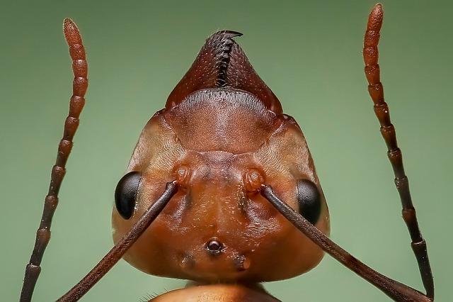 hmyz.jpg