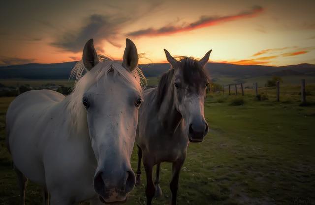 koně.jpg