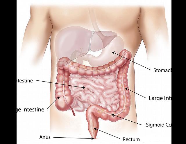 Čo tvorí imunitný systém