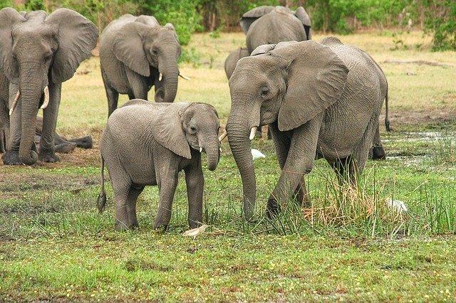 Slony a ich život