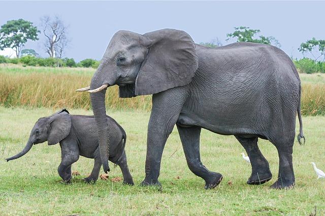 Matka a mláďa.jpg