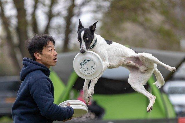 Pes chytá lietajúci tanier.jpg
